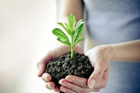 Keeping Employee Engagement Fresh with Plant Gift