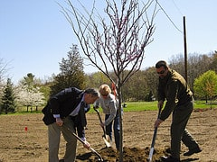 Build workplace camaraderie by celebrating Earth Day and Arbor Day as a team!