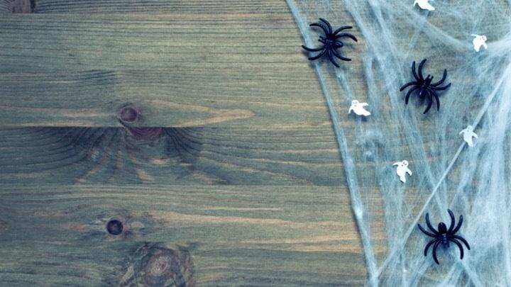 Halloween Zoom Background - Spiders